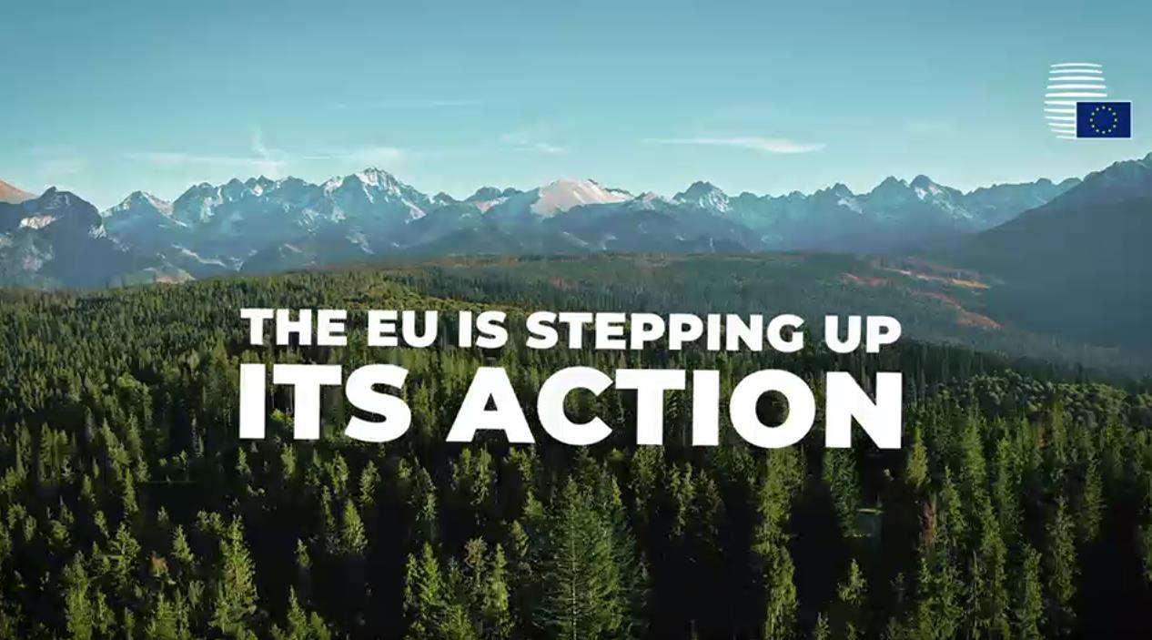 Action de l'UE pour protéger les forêts du monde : le Conseil adopte des conclusions.