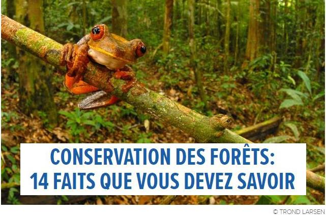 Conservation des forêts : 14 faits que vous devez connaître