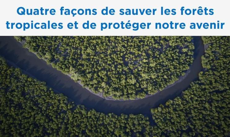 Quatre façons de sauver les forêts tropicales et de protéger notre avenir