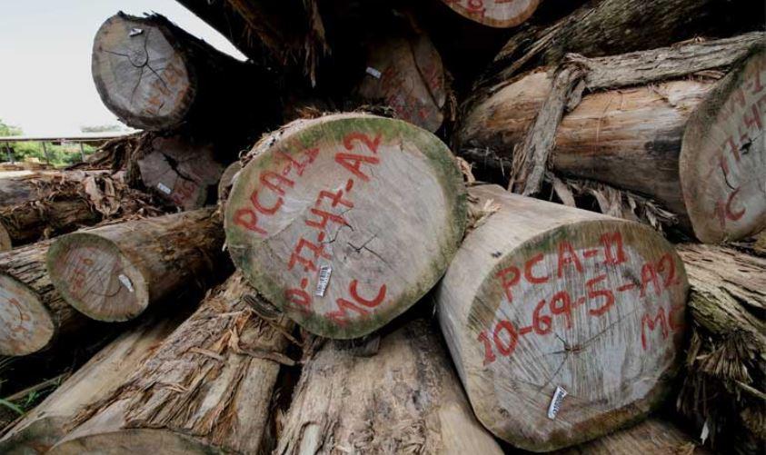 L'Indonésie met fin à la licence FLEGT de légalité du bois : les craintes d'un boom de l'exploitation forestière illégale.