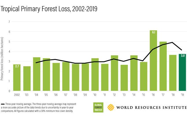 Un terrain de football de forêt tropicale primaire perdu toutes les 6 secondes en 2019