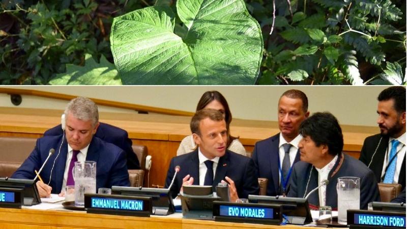 Lancement de l'Alliance pour la préservation des forêts tropicales