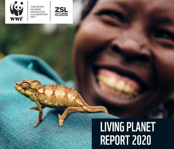 Rapport WWF – Planète Vivante 2020 : déclin de la biodiversité.