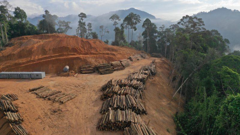 Déforestation importée en France (SNDI) : point sur la situation par un collectif d'associations