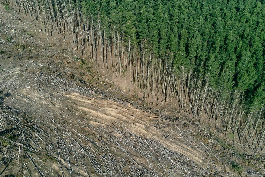 L'exploitation forestière illégale du bois de récupération en Russie étudiée par FSC.