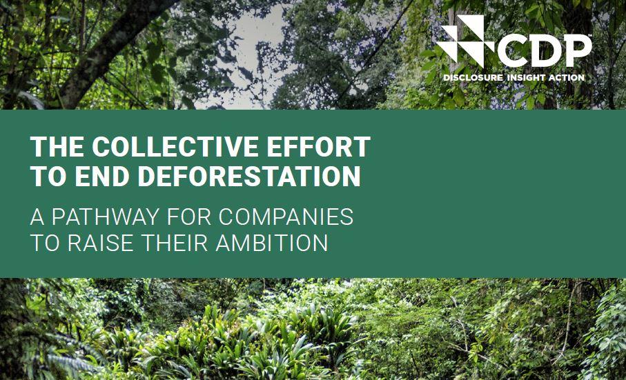 Rapport CDP 2020 sur les forêts