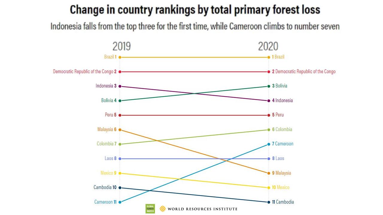 +12% de forêts primaires perdues en 2020 par rapport à 2019