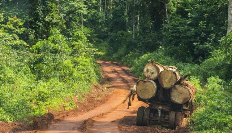 Le SIGIF-2 du Cameroun pour le FLEGT rejeté par l'UE