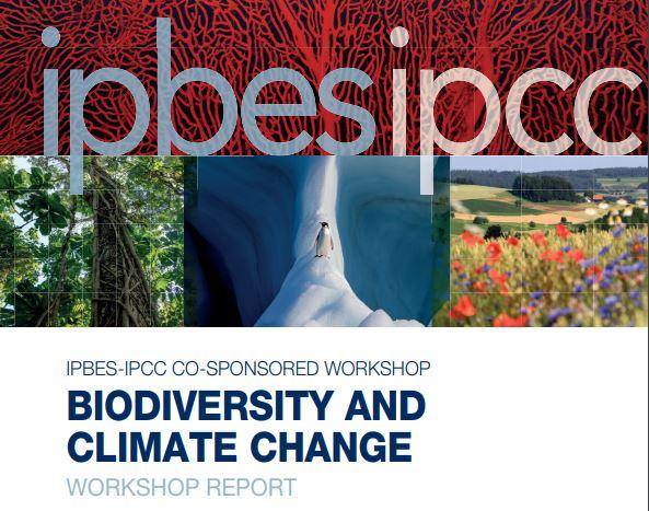 Rapport IPBES-GIEC sur la biodiversité et le changement climatique